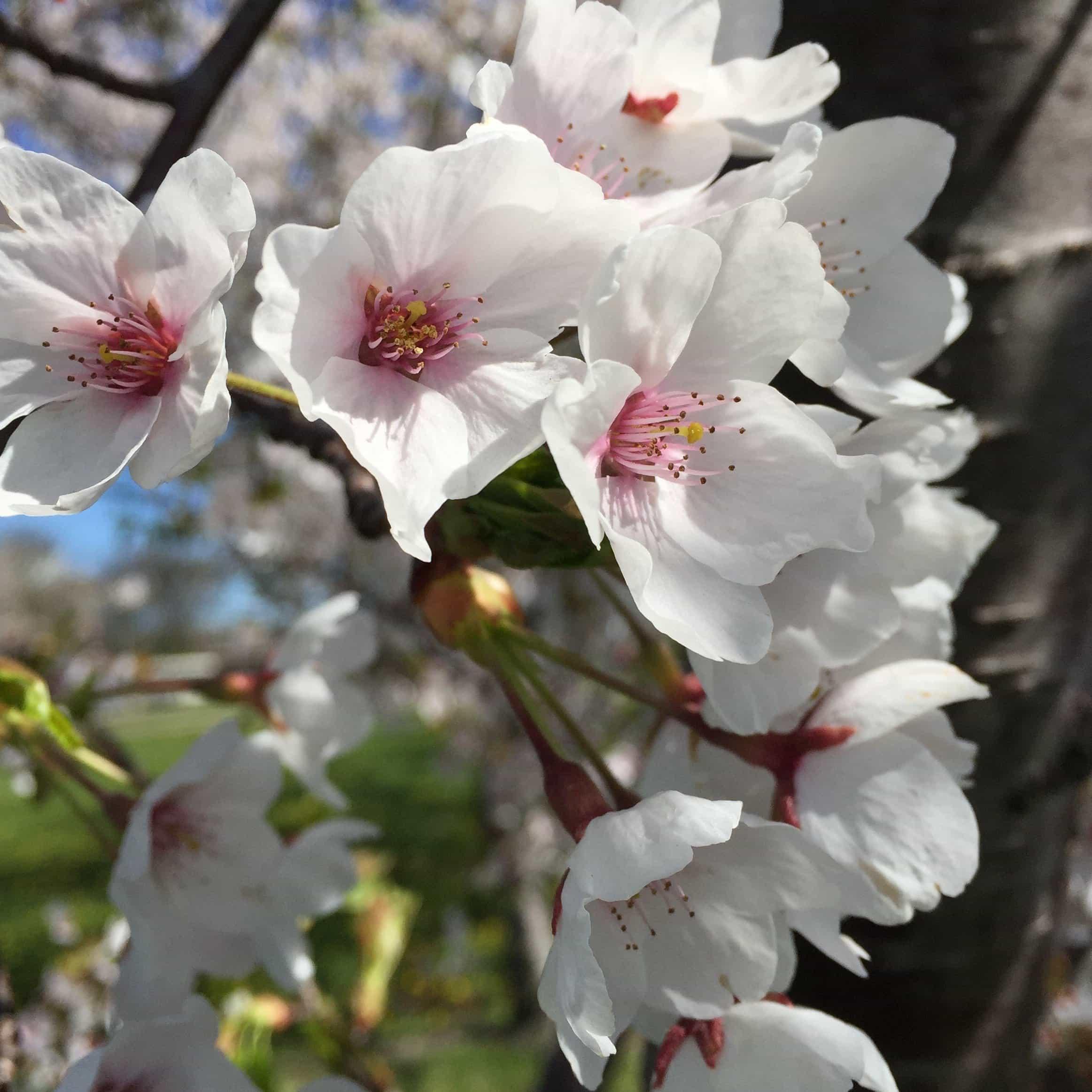 Imagine Gratuită Flori Primavara Filiala Natura Filiala