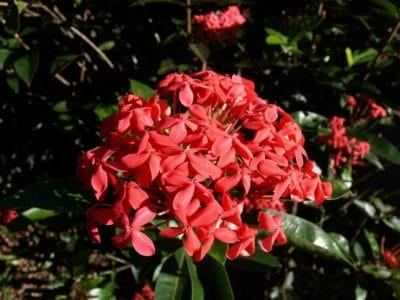 fleur, flore, herbe, jardin, nature, feuille, arbre, pétale, plante