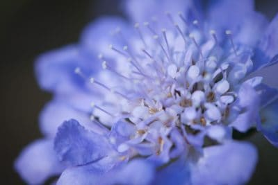 макрос, плодник, цвете, природа, флора, Градина, листа, листенца, лятото, билка