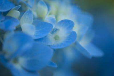 makronaredbe, plava, prirode, cvijet, flora, biljka, biljka, organizam