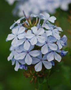 fleurs sauvages, flore, nature, pétale, feuille, été, jardin, belle