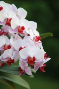 λευκό λουλούδι, χλωρίδα, φύση, Κήπος, leaf, πέταλο, ροζ, λουλούδια