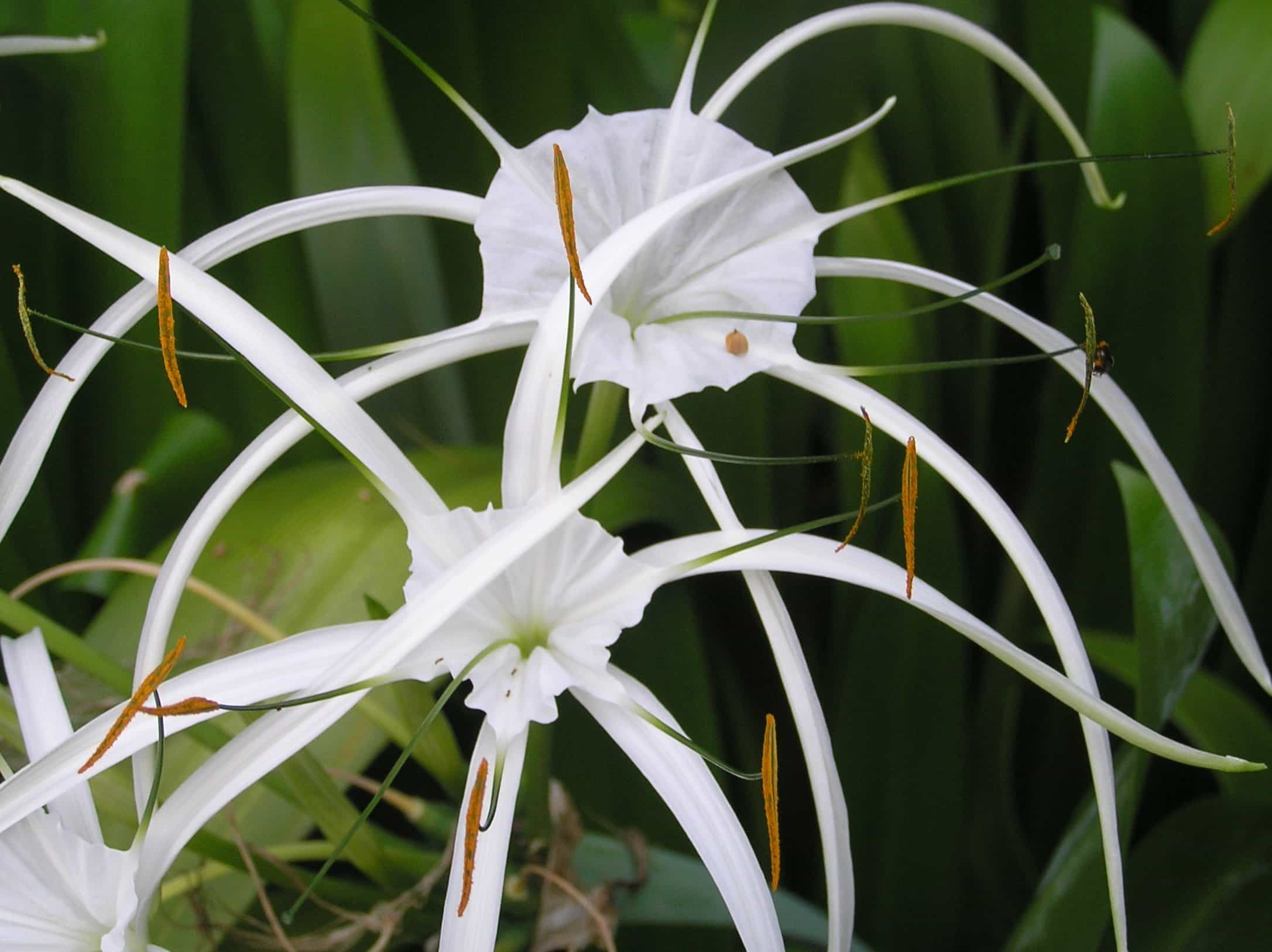 Free Picture Nature Mimicry White Flower Flora Summer Leaf