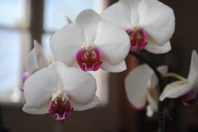 blomma, natur, flora, orchid, ört, detalj, makro, vacker, kronblad, exotiska