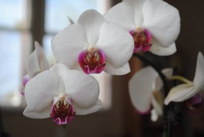 flower, nature, flora, orchid, herb, detail, macro, beautiful, petal, exotic