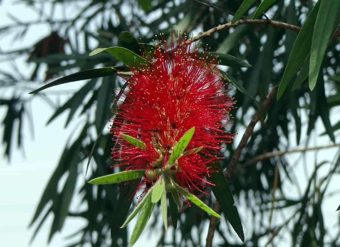 drvo, priroda, list, grana, flore, tučak, detalj, makronaredbe, kist, biljka, vanjski