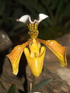nature, flower, flora, leaf, exotic, orchid, pistil, pollen, herb, plant