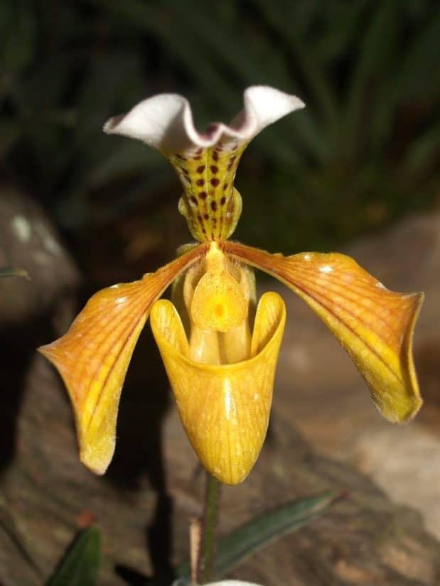 nature, fleur, flore, feuille, exotique, orchidées, pistil, pollen, herbe, plante