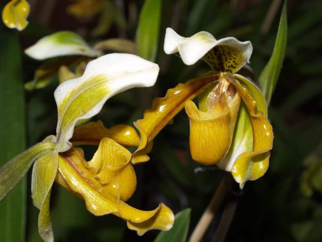 fleur, nature, flore, feuille, jardin, pétale, feuille, herbe, orchidée
