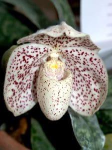 Natur, Flora, Blumen, Pollen, Orchidee, Stempel, Blatt, Garten