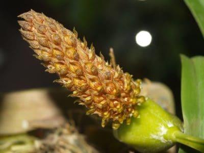 prirode, list, biljka, cvijet, tučak, detalj, makronaredbe, list, egzotični