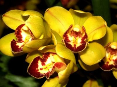 flower, nature, flora, petal, yellow, orchid, macro, garden, leaf, plant, herb
