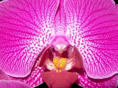 Hoa, kỳ lạ, vĩ mô, phấn hoa, nhụy hoa, thực vật, thiên nhiên, đẹp, phong lan, cây