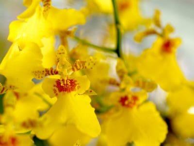 nature, nectar, fleur, flore, feuille, orchidée jaune, détail, végétaux, herbes