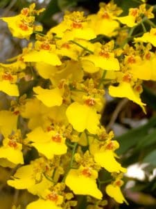 flower, nature, flora, herb, plant, autumn, pistil, leaves