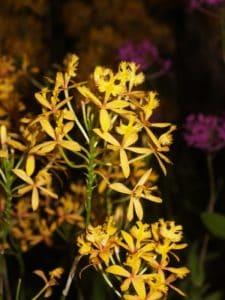 flower, nature, leaf, detail, pistil, herb, flora, plant, summer