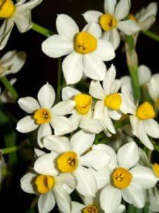 flower, nature, flora, garden, petal, leaf, plant, herb