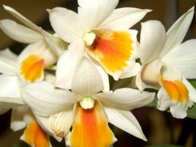 flower, nature, macro, detail, nature, petal, flora, leaf, narcissus, plant