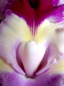 macro, detail, pollen, nectar, pistil, flower, nature, flora, beautiful, petal, orchid