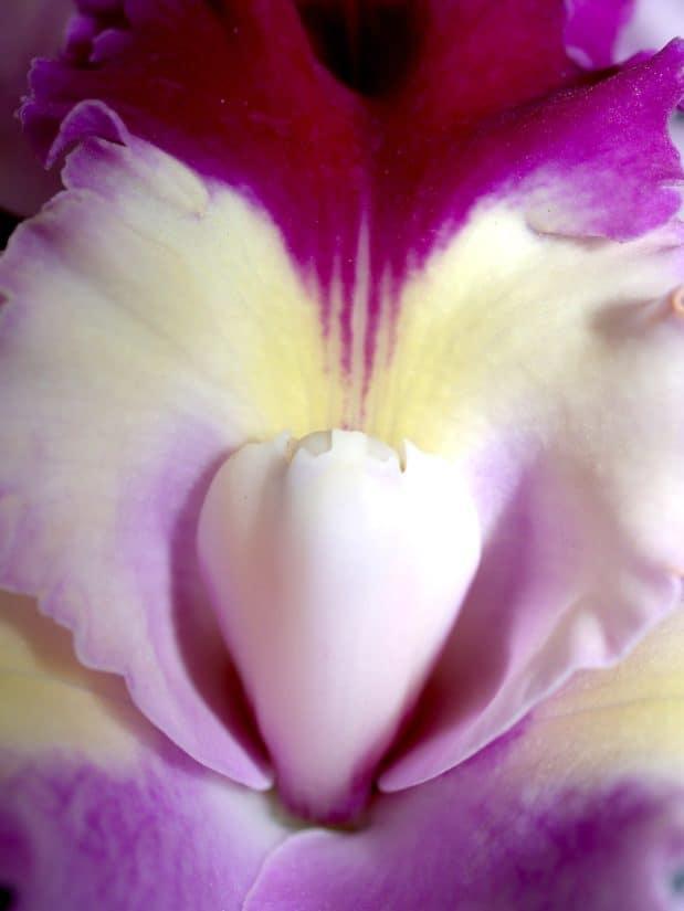 宏观, 细节, 花粉, 花蜜, 雌蕊, 花, 自然, 植物, 美丽, 花瓣, 兰花