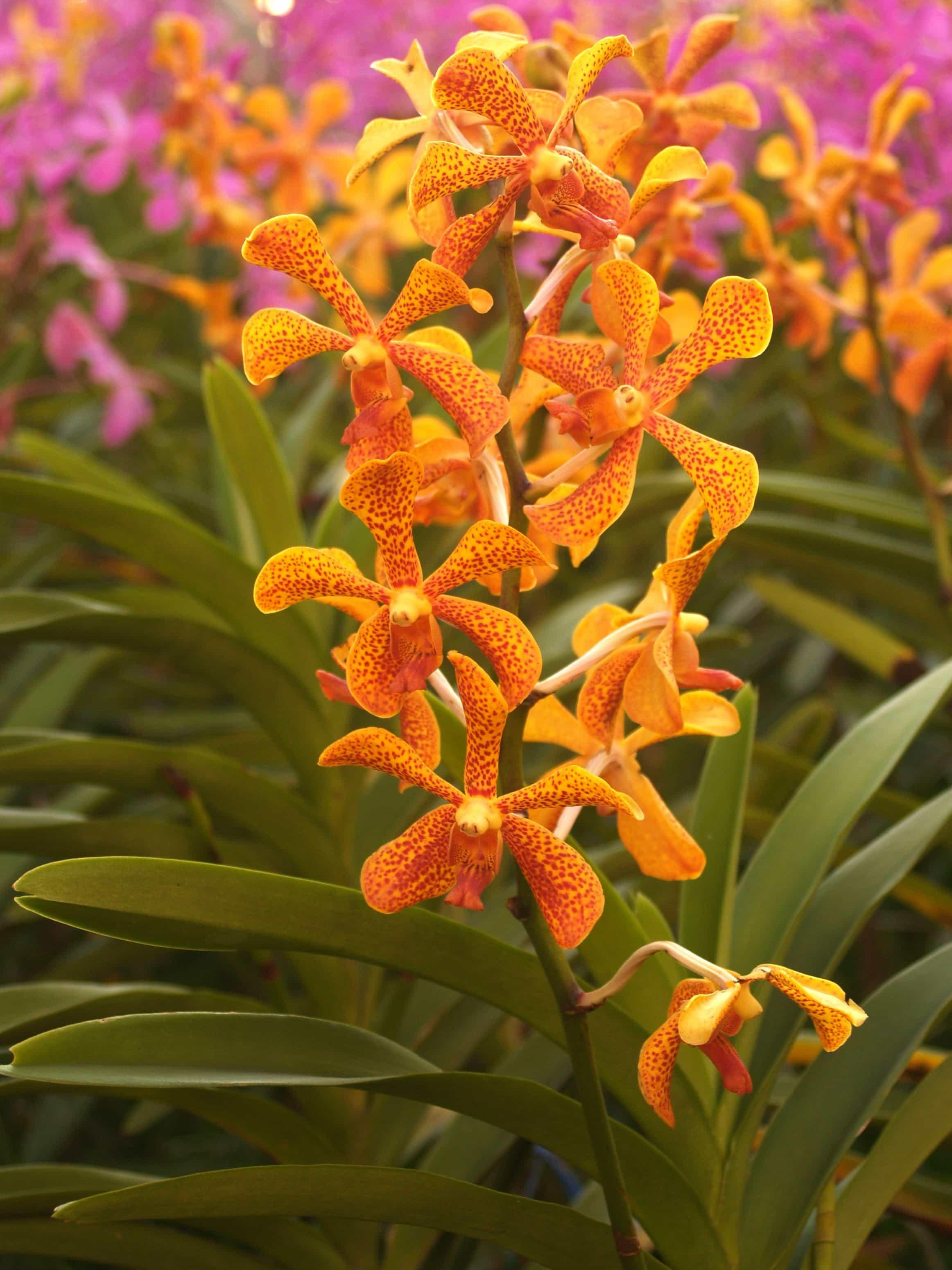 Free Picture: Flower, Nature, Flora, Summer, Garden, Leaf