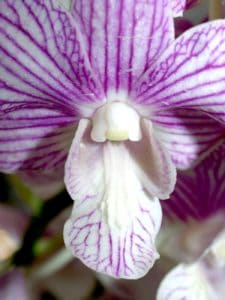orchid, herb, macro, flower, nature, flora, garden, pistil, beautiful, petal