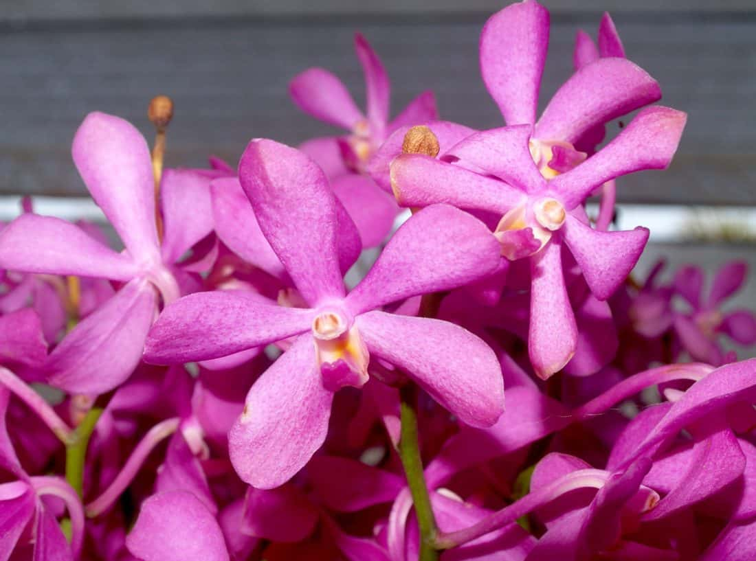 Blume, Makro, Flora, Natur, Stempel, schön, Garten, Blütenblatt, Pflanze