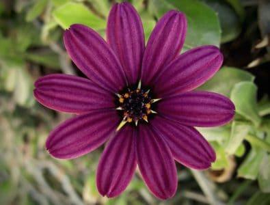 kukka flora, luonto, EMI, Internet, kesä, terälehti kasvi