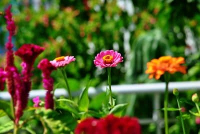 kukka luonto, yrtti, flora, EMI, Internet, kesä, lehtiä, terälehti kasvi