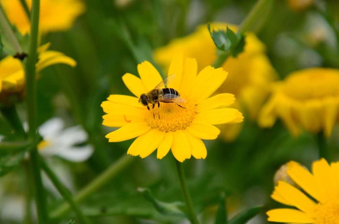 Imagen gratis naturaleza verano insecto flor flora for Ahuyentar abejas jardin