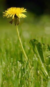 herbe, nature, été, flore, feuille, champ, herbe, plante