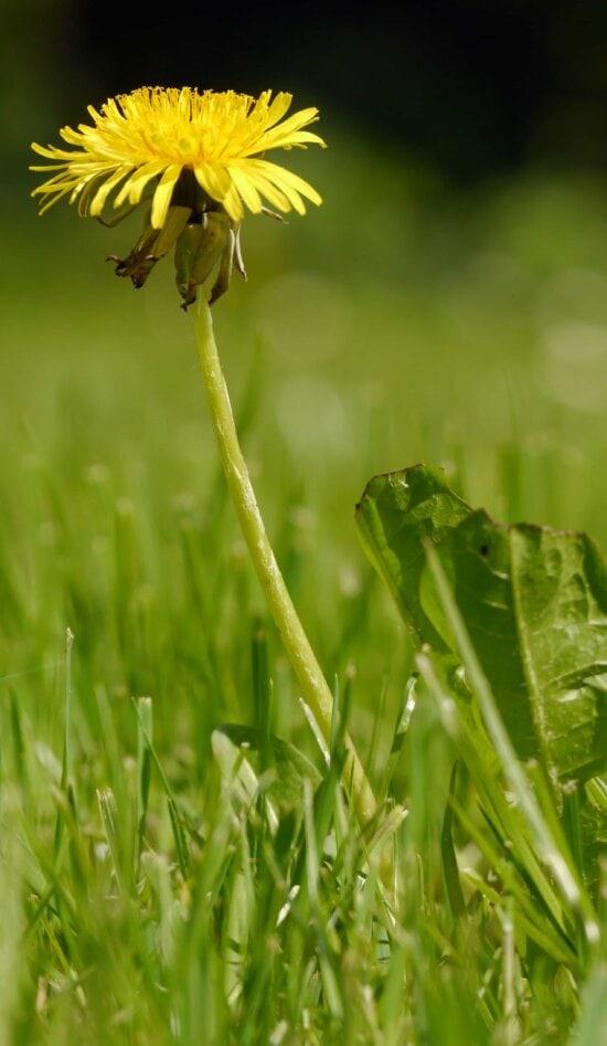 grass, nature, summer, flora, leaf, field, herb, plant