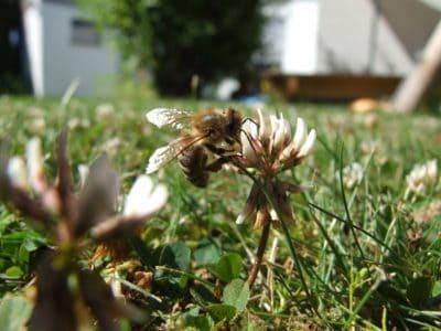 nature, fleurs, abeille, pelouse, herbe, été, jardin, feuille, flore