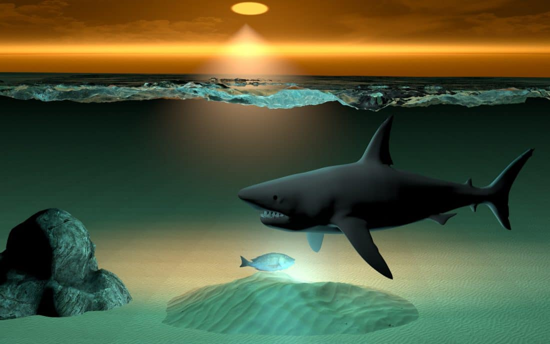 animation, ocean, underwater, sea, shark, illustration, computer art, fish