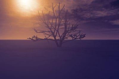 Ilustración, arte de la computadora, atardecer, paisaje, amanecer, atardecer, cielo, silueta, árbol