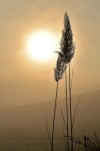 sunlight, silhouette, grass, sunrise, sun, nature, dawn, sky, landscape, outdoor
