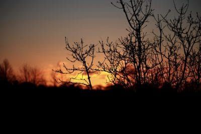 sunrise, darkness, shadow, silhouette, dawn, landscape, tree, backlit, sun
