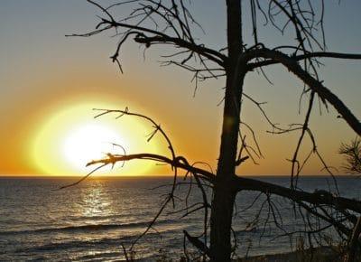 sziluett, Napkelte, ág, napfény, fa, Hajnal, táj, víz, nap, alkonyat, strand, természet