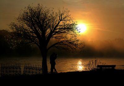 Fajar, matahari terbit, senja, matahari, siluet, lanskap, pohon, senja
