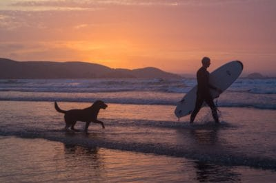 person, dog, recreation, beach, sunrise, ocean, seashore, silhouette
