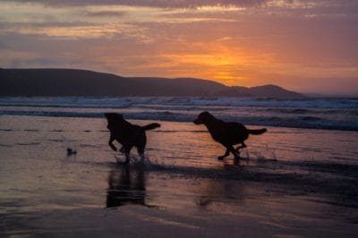water, sunset, beach, ocean, dog, animal, sea, sun, silhouette, sky