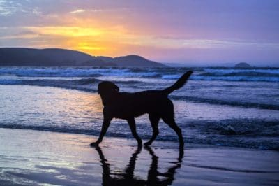 water, beach, sea, ocean, sunrise, pet, cloud, seashore, sky, dog