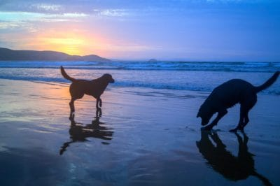 water, beach, silhouette, sunrise, pet, dog, ocean, sea, seaside, sky, outdoor