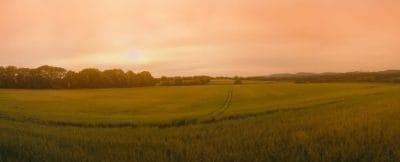 paisagem, campo, nascer do sol, céu, agricultura, amanhecer, grama