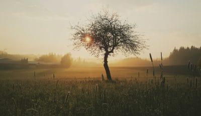 夜明け、風景、日の出、太陽、水分、シルエット、霧、ツリー、自然、空
