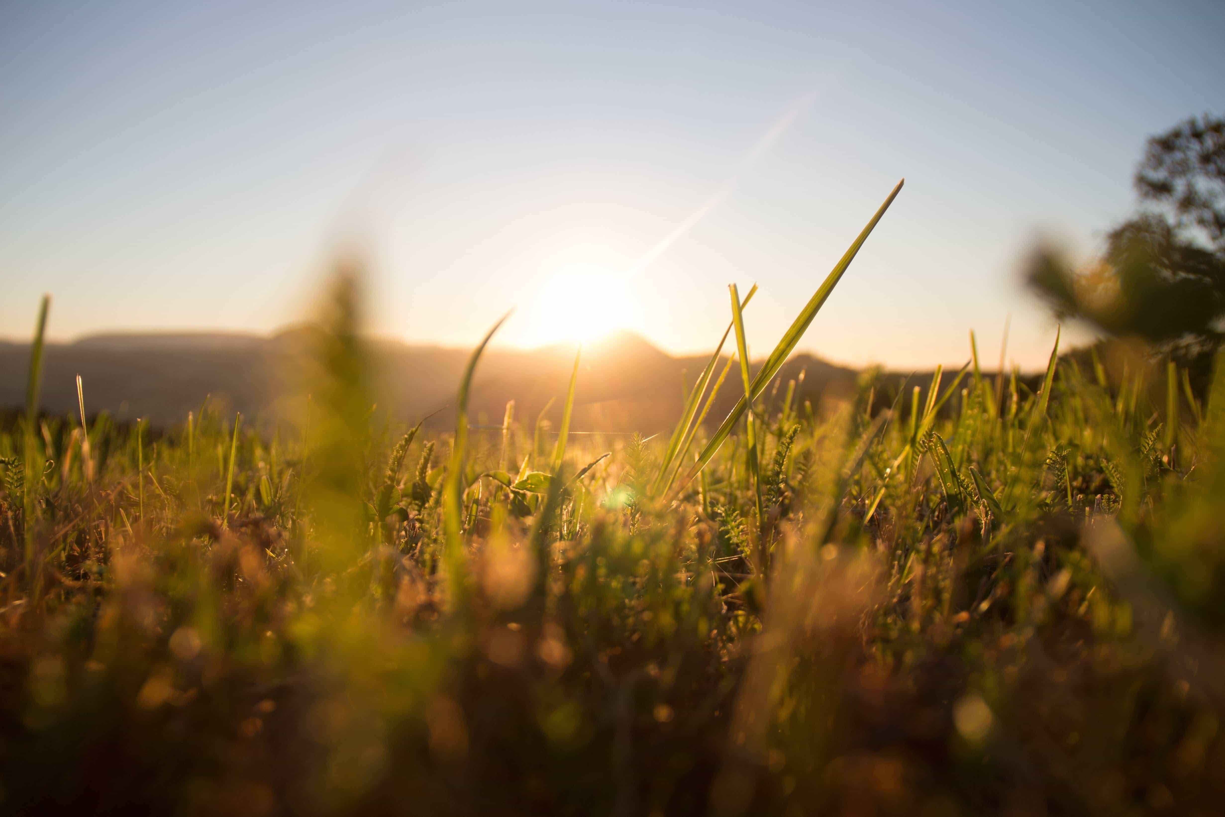 Free picture: field, grass, sunrise, herb, sun, nature ...