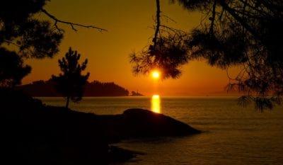 matahari terbit, siluet, pohon, fajar, air, pantai, backlit, senja, matahari, laut