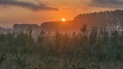 zori, răsărit de soare, silueta, peisaj, copac, soare, ceaţă, natura, cerul
