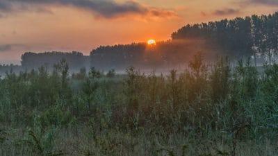 aube, lever du soleil, silhouette, forêt, paysage, nature, soleil, ciel, arbre, brouillard