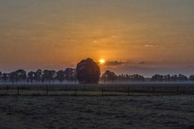 salida del sol, silueta, campo, amanecer, paisaje, sol, silueta, árbol, cielo